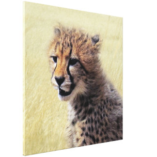 Cute baby Cheetah Cub Gallery Wrapped Canvas