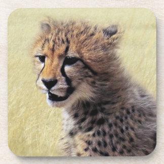 Cute baby Cheetah Cub Coasters