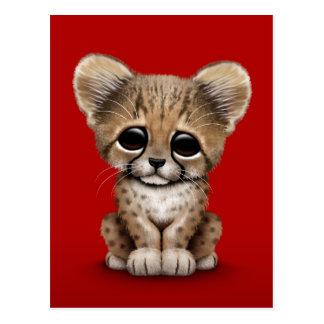Cute Baby Cheetah Cub on Red Postcard