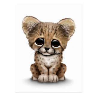 Cute Baby Cheetah Cub on White Postcard