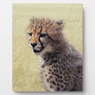 Cute baby Cheetah Cub Plaque