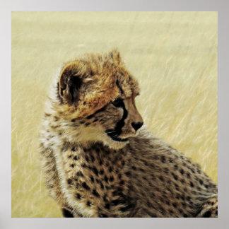 Cute baby Cheetah Cub Posters