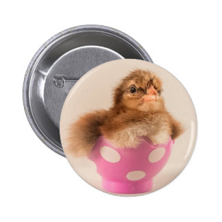 Cute Baby Chick in Easter Egg Pin