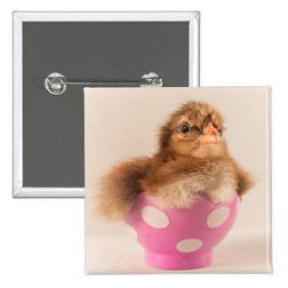 Cute Baby Chick in Easter Egg Pinback Buttons