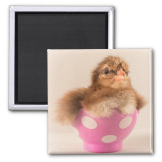 Cute Baby Chick in Easter Egg Magnet
