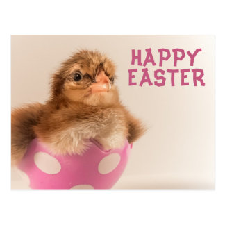 Cute Baby Chick in Easter Egg Postcard