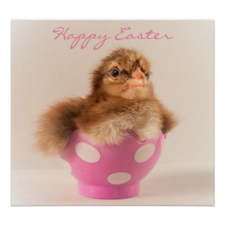 Cute Baby Chick in Easter Egg Poster