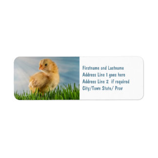 Cute Baby Chick in Grass with Sunbeam Photo Label