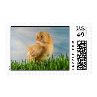 Cute Baby Chick in Grass with Sunbeam Photo Stamp