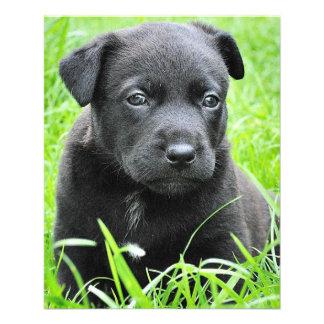 Cute Baby Dog Flyer