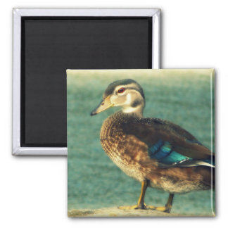 Cute Baby Duck 2 Inch Square Magnet