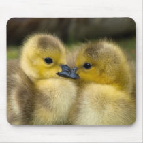 Cute Baby Ducklings Mouse Pad