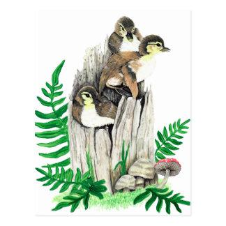 Cute Baby Ducks Postcard