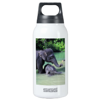 Cute baby elephant bathing in river with mother insulated water bottle
