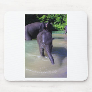 Cute baby elephant in river mouse pad