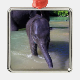 Cute baby elephant in river ornament