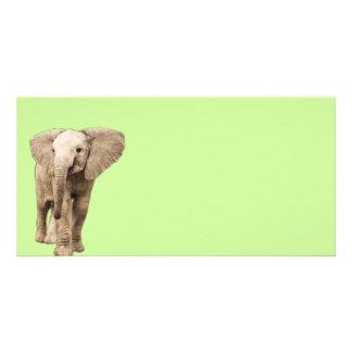 Cute Baby Elephant Photo Card