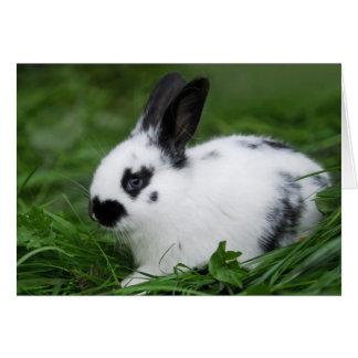 Cute Baby English Bunny Rabbit - Baby Animals Card