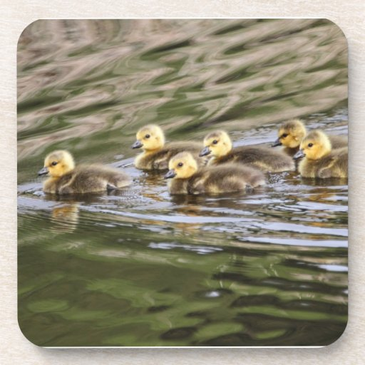 Cute Baby Geese Photo Drink Coasters