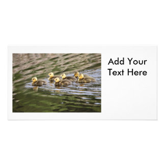Cute Baby Geese Photo Photo Cards