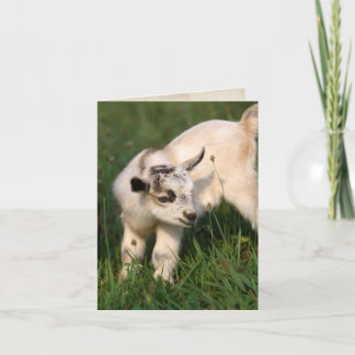 Cute Baby Goat Card