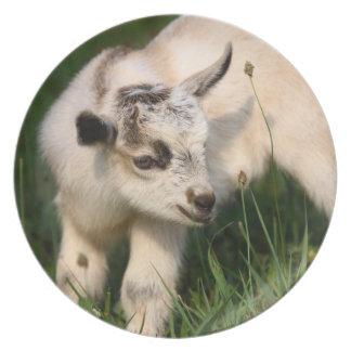 Cute Baby Goat Dinner Plate