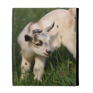 Cute Baby Goat iPad Cases