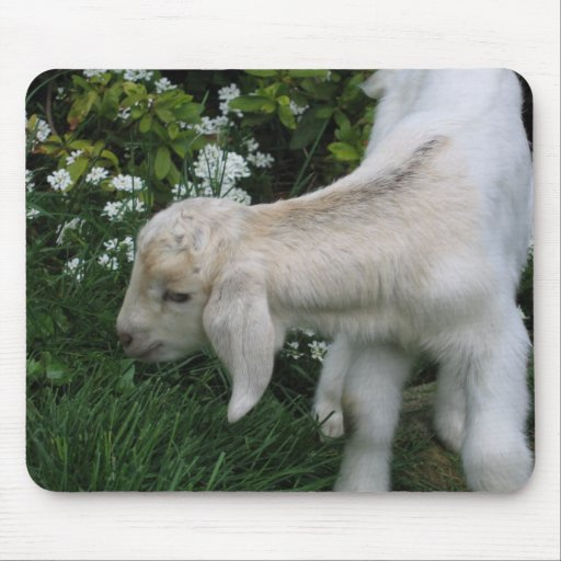 Cute Baby Goat Mouse Pad