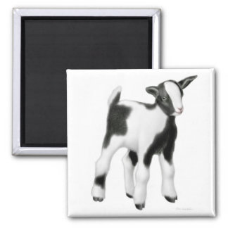 Cute Baby Goat Square Magnet