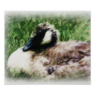 Cute Baby Goose Drawing Poster