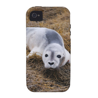 Cute Baby Harbor Seal iPhone 4/4S Cover