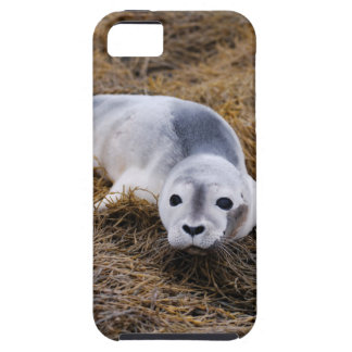 Cute Baby Harbor Seal iPhone 5 Cases