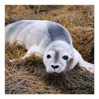 Cute Baby Harbor Seal Invitation