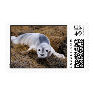 Cute Baby Harbor Seal Postage Stamps