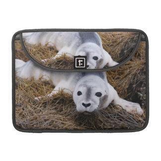 Cute Baby Harbor Seal Sleeves For MacBook Pro