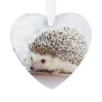 Cute Baby Hedgehog Animal Ornament