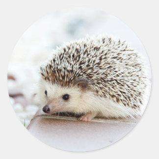 Cute Baby Hedgehog Classic Round Sticker