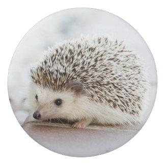 Cute Baby Hedgehog Eraser