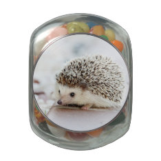Cute Baby Hedgehog Jelly Belly Candy Jar at Zazzle