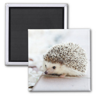 Cute Baby Hedgehog 2 Inch Square Magnet