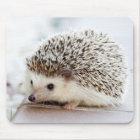 Cute Baby Hedgehog Mouse Pad