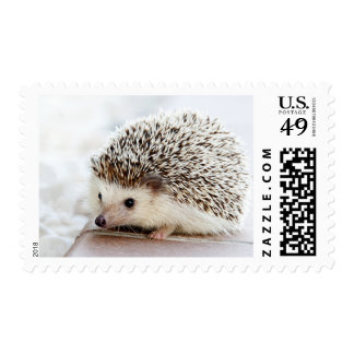 Cute Baby Hedgehog Photo Template Postage