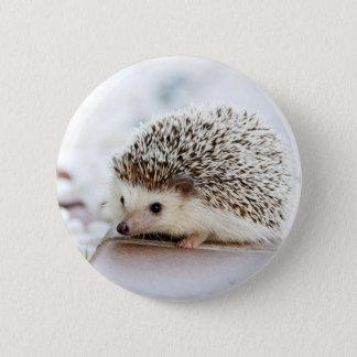 Cute Baby Hedgehog Pinback Button