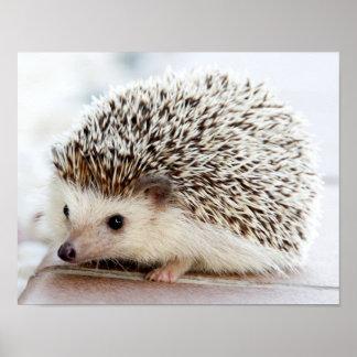 Cute Baby Hedgehog Poster