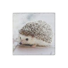 Cute Baby Hedgehog Stone Magnet at Zazzle