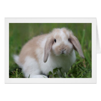 Cute Baby Holland Lop Rabbit - Baby Animals Greeting Card