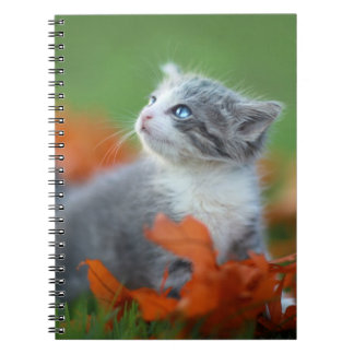 Cute Baby Kittens Playing Outdoors in the Grass Notebook