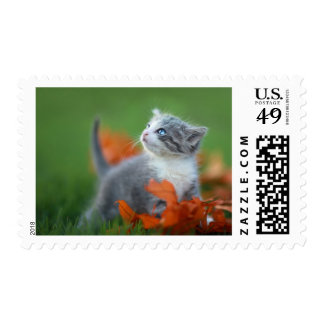 Cute Baby Kittens Playing Outdoors in the Grass Postage