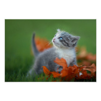 Cute Baby Kittens Playing Outdoors in the Grass Poster
