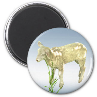 Cute Baby Lamb Eating Grass with Blue Sky Magnet